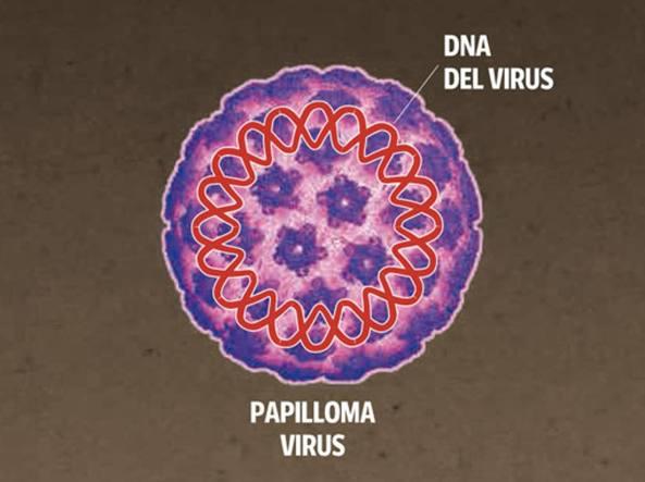 papilloma virus ricerca)