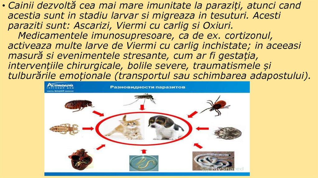 boli umane cauzate de viermi)