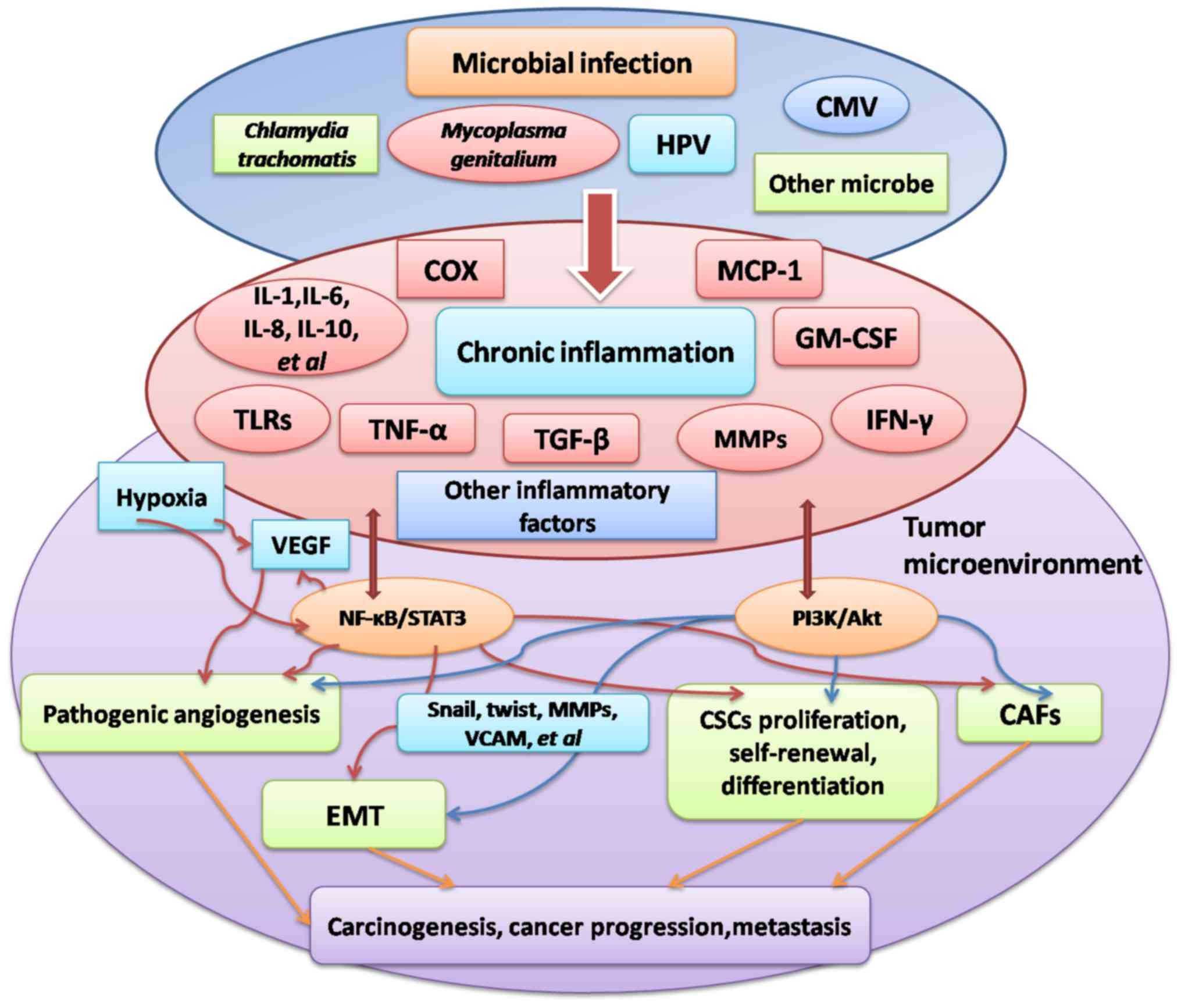 hpv virus ovarian cancer)