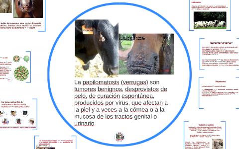 papilomatosis bovina etiologia