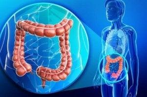dezintoxicare la colon 3 zile