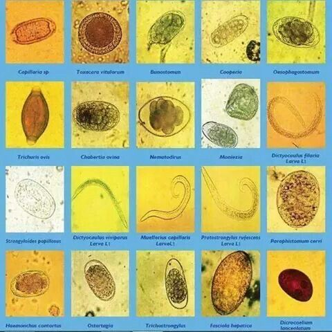 paraziti veterinari cde