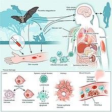 virus marburg