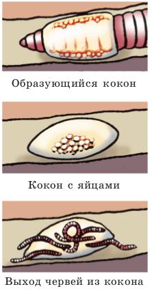 o persoană se amestecă cu viermii încrucișați)