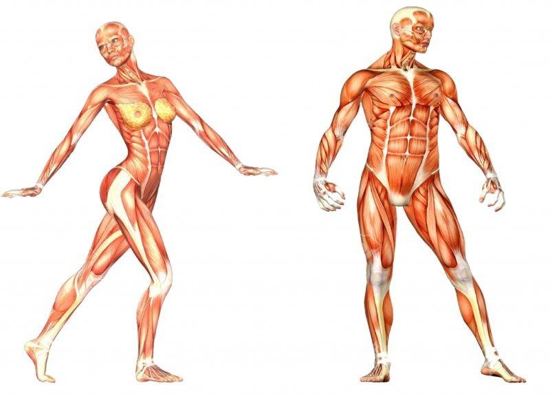 Mă pierd în corpul uman. Magneziu: Rolul sau in Organism & Simptome Deficit