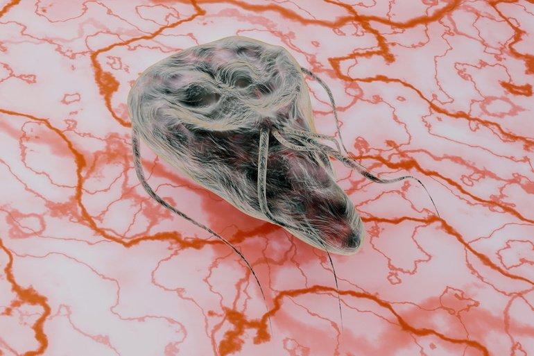stadiile dezvoltării viermilor rotunzi umani medicament cu bandă largă