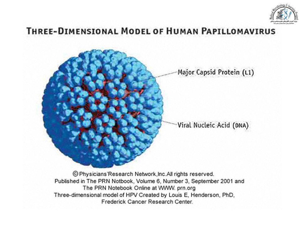 human papillomavirus dna hpv dna)