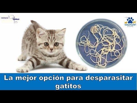 oxiuros en gatos sintomas)