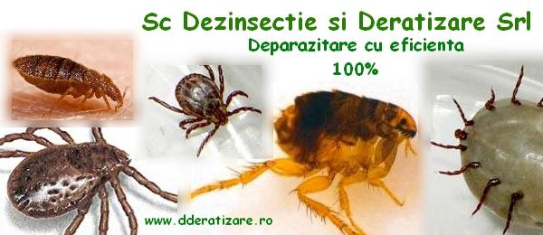 ce paraziti de insecte)