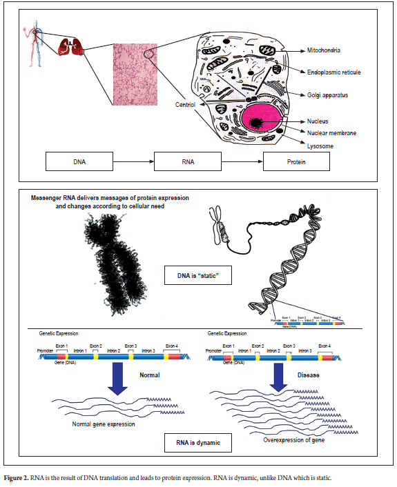 gastric cancer biomarkers a systems biology approach)