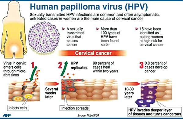 human papillomavirus spread