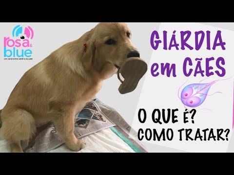 Feline Giardia - Cat - Digestive disorder - Genimal Biotechnologies