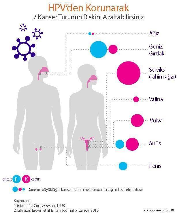 papillomavirus ne demek