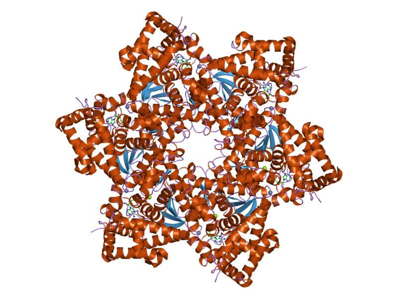 il papilloma virus e trasmissibile