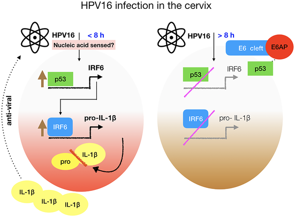 hpv virus manner behandlung
