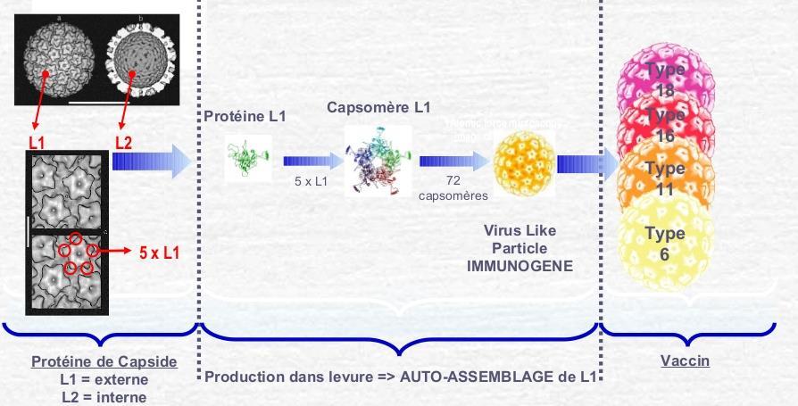 Vaccin hpv homme vidal.