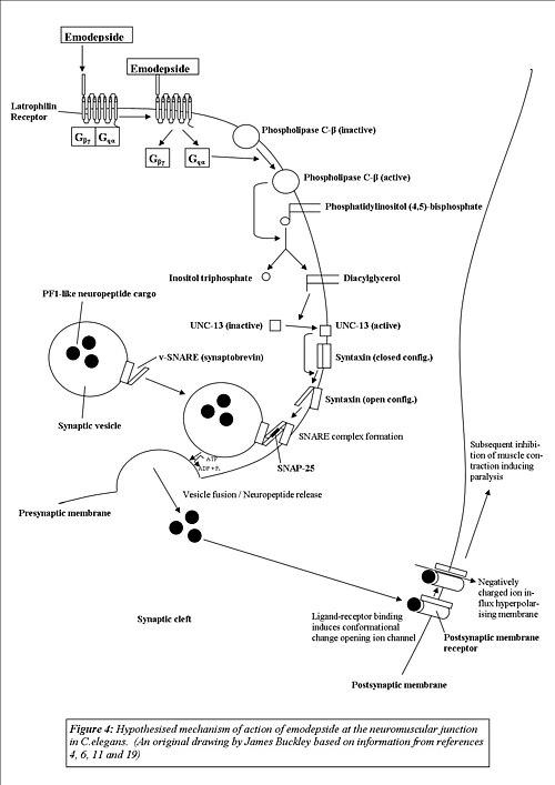 anthelmintic mechanism of action