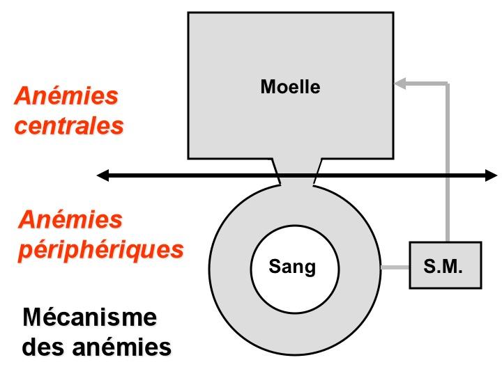 anemie falciforma - Traduction en français - exemples roumain   Reverso Context