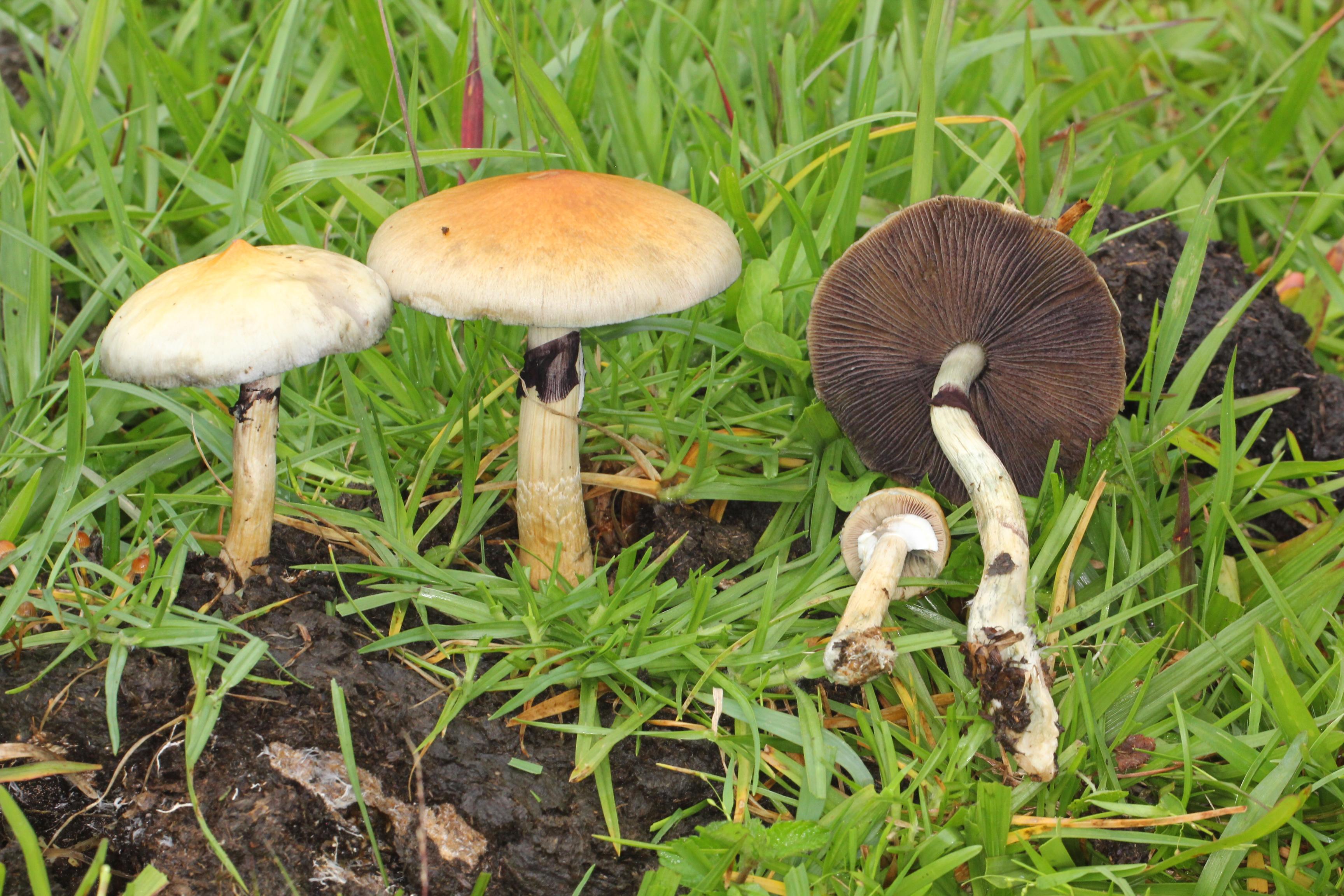 Efectele nocive ale plantelor şi ciupercilor halucinogene