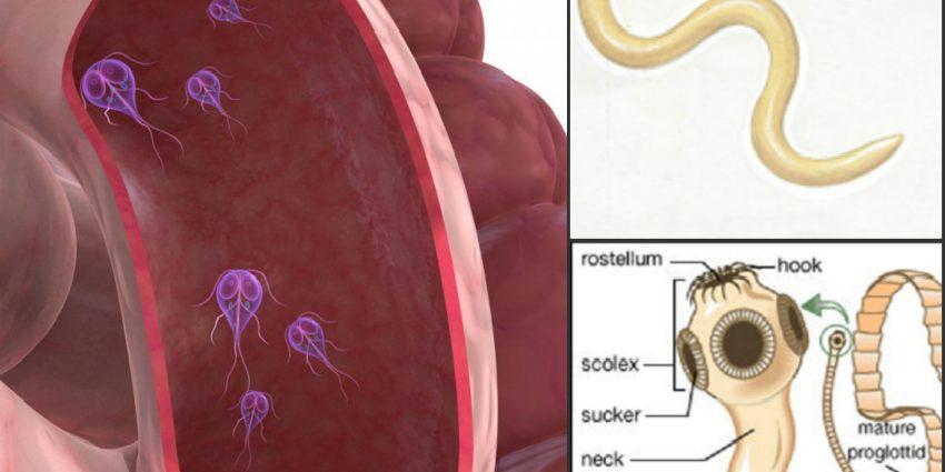 parazit intestinal copii