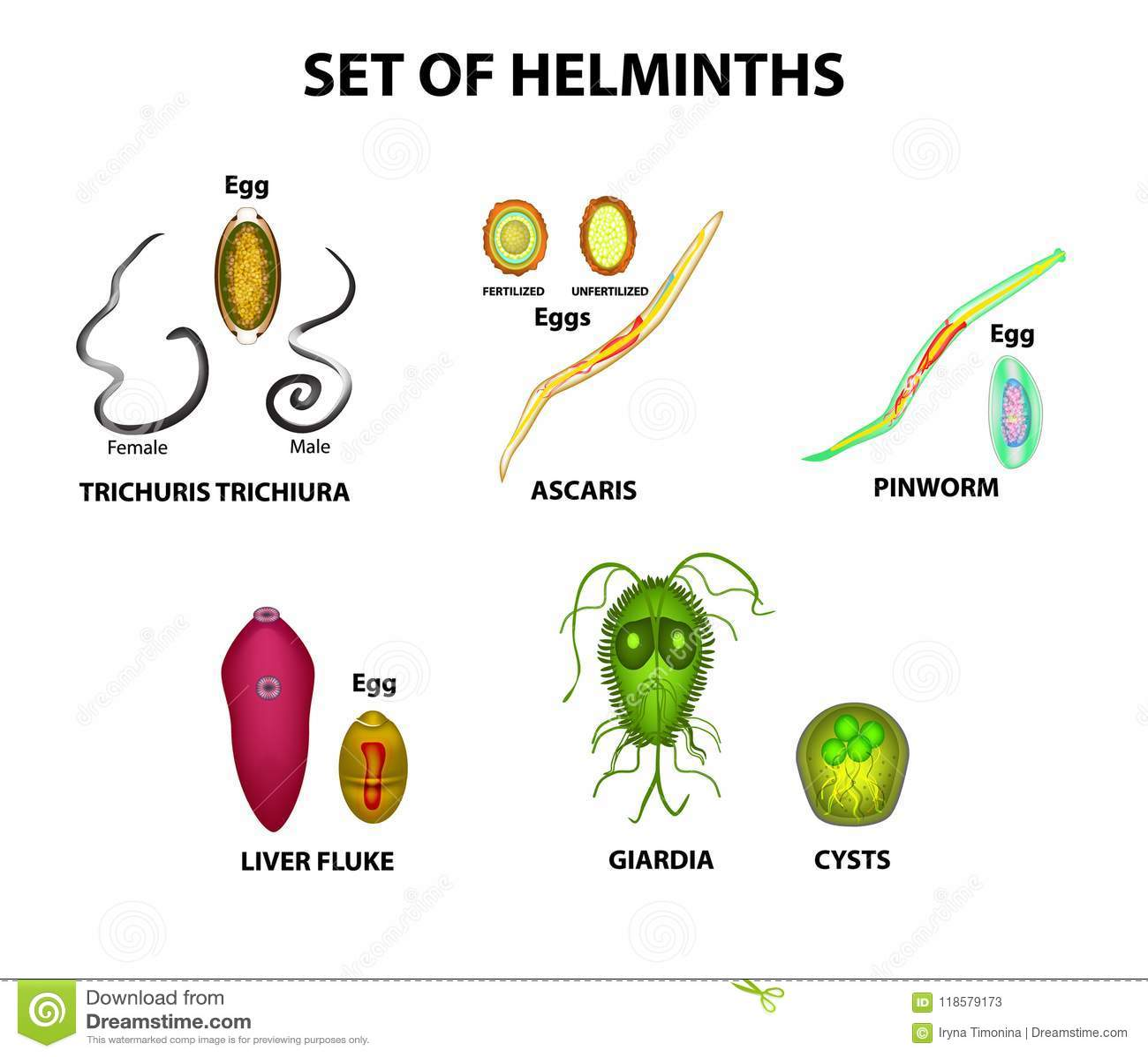 Anthelmintic meaning. Anthelmintic meaning uk