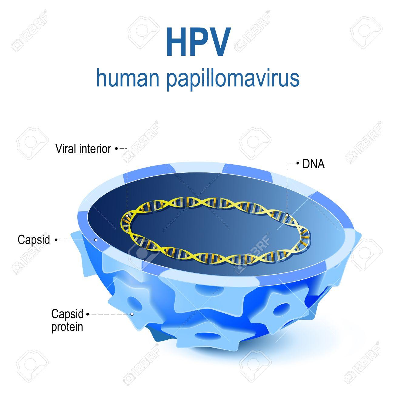 hpv virus a dna