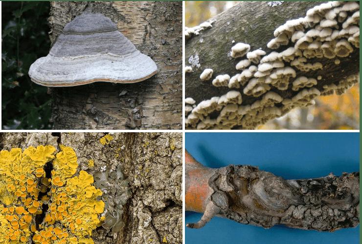 dăunătoare ciupercilor parazite)