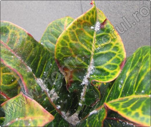 Parazitii plantelor de interior - Casă şi familie > Plante - anvelope-janteauto.ro