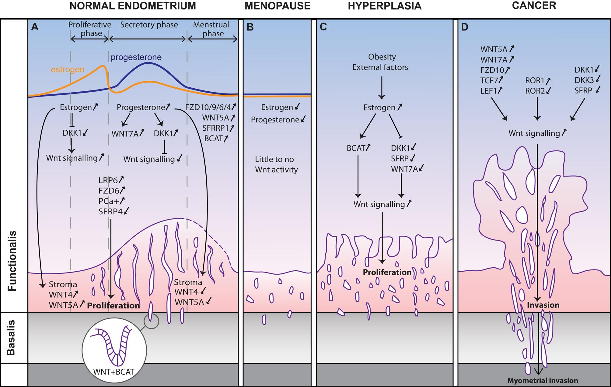 endometrial cancer kras papilomele pe pleoape provoacă