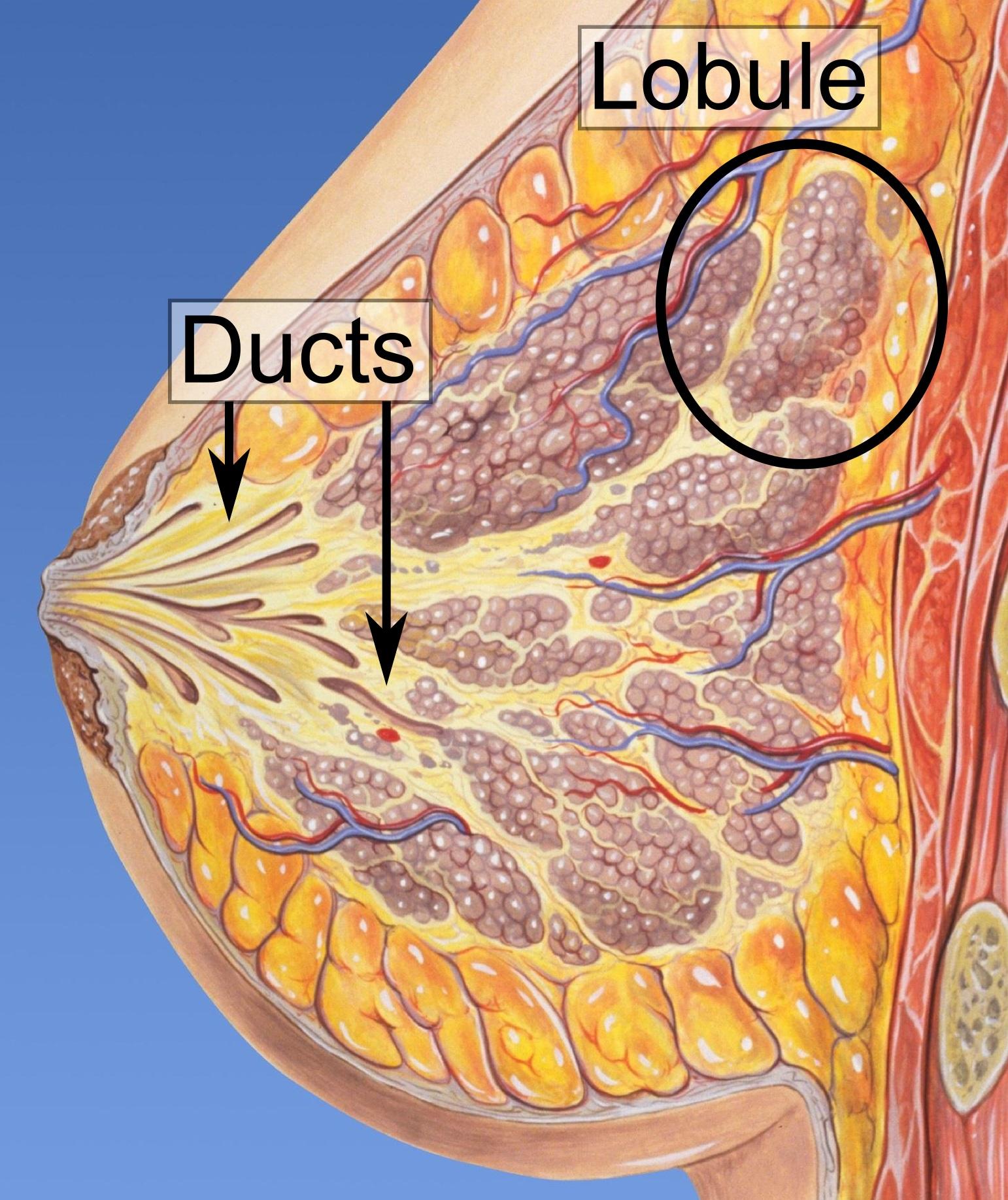 tratamentul papilomului vezicii biliare)
