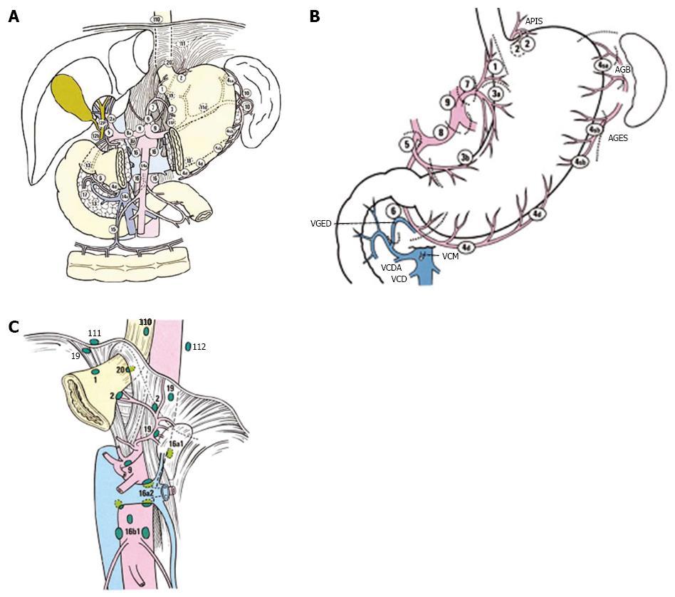 Gastric cancer regional lymph nodes