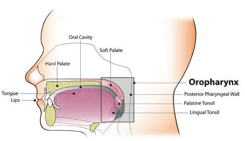 human papillomavirus related head and neck cancer)