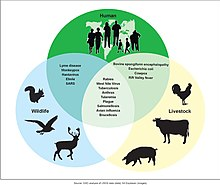 is schistosomiasis a zoonotic disease)
