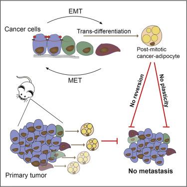 metastatic cancer cells