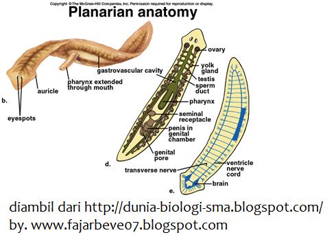 Bio Sbmptn - PDF Free Download