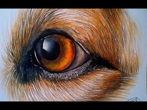 ojos de perro