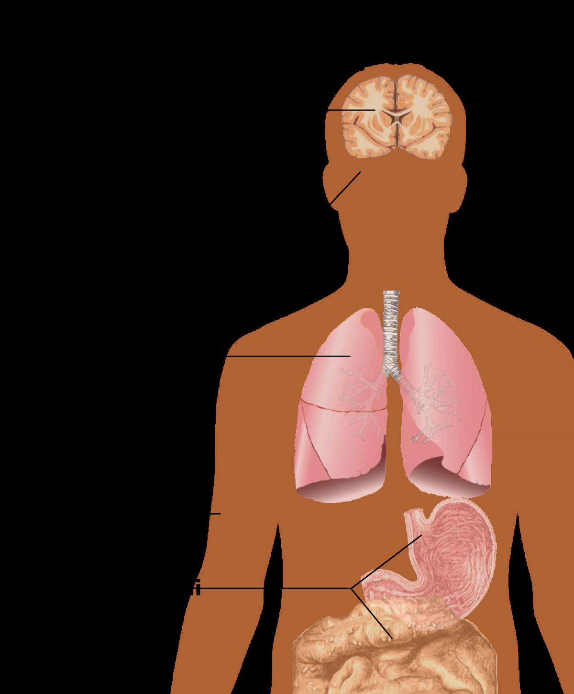 Condilomi papilloma - Papilloma virus si trasmette con la saliva