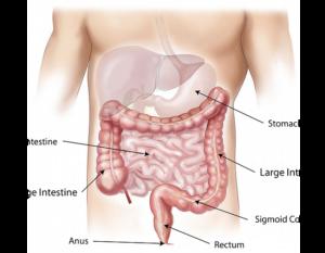 simptomele paraziților din corpul adult