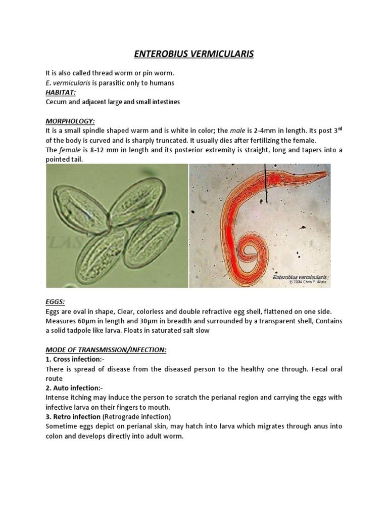 tablete din larve de vierme)